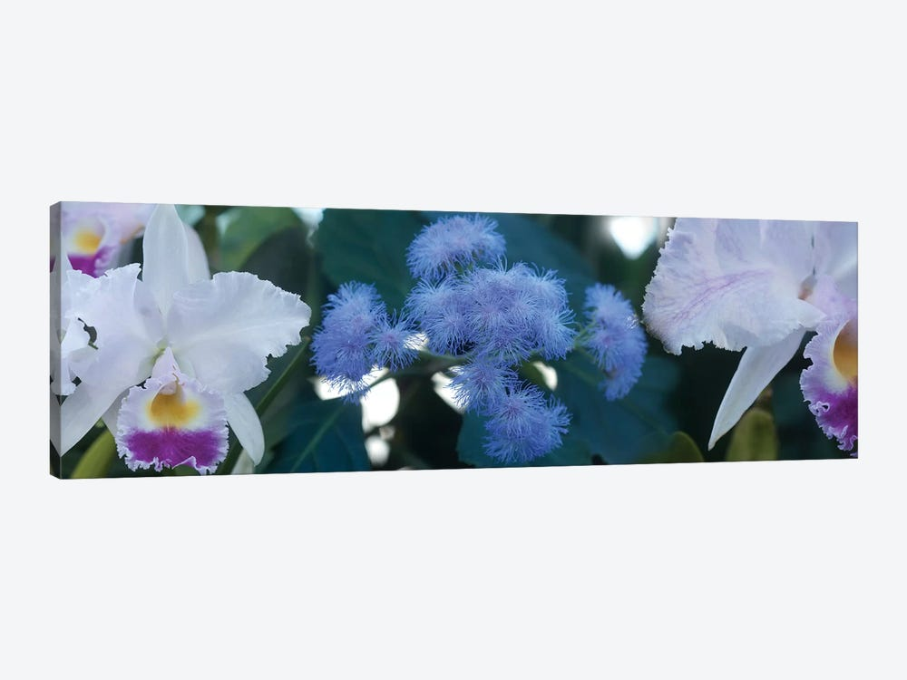Close-Up Of Iris And Blue Flowers I by Panoramic Images 1-piece Art Print