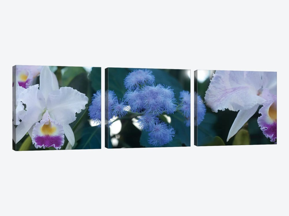 Close-Up Of Iris And Blue Flowers I by Panoramic Images 3-piece Art Print