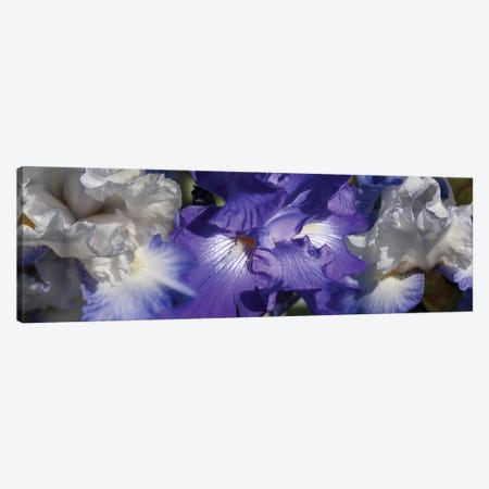 Close-Up Of Iris And Blue Flowers II Canvas Print #PIM14445} by Panoramic Images Canvas Wall Art