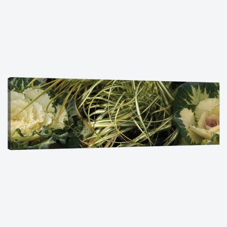 Close-Up Of Kale Flowers And Grass 3-Piece Canvas #PIM14448} by Panoramic Images Art Print