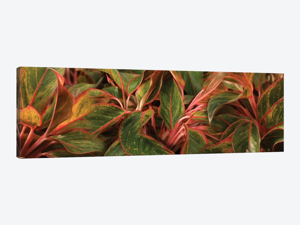 Close-Up Of Leaves by Panoramic Images 1-piece Canvas Art