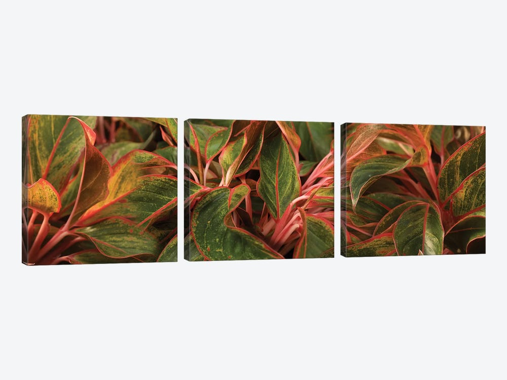 Close-Up Of Leaves by Panoramic Images 3-piece Canvas Artwork