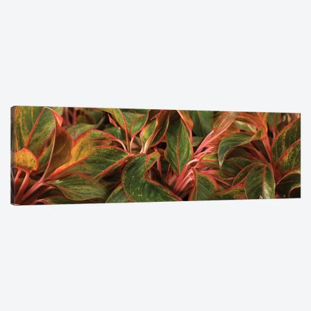 Close-Up Of Leaves 3-Piece Canvas #PIM14450} by Panoramic Images Canvas Artwork