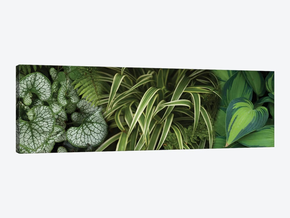 Close-Up Of Lovable Leaves by Panoramic Images 1-piece Canvas Print
