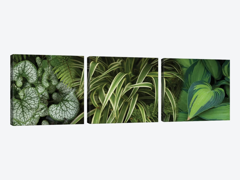 Close-Up Of Lovable Leaves by Panoramic Images 3-piece Canvas Art Print