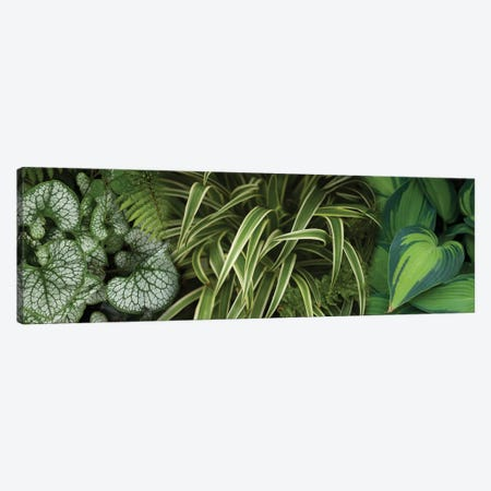 Close-Up Of Lovable Leaves 3-Piece Canvas #PIM14451} by Panoramic Images Canvas Art
