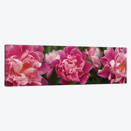 Close-Up Of Magnolia Flowers In Bloom 3-Piece Canvas #PIM14452} by Panoramic Images Canvas Wall Art