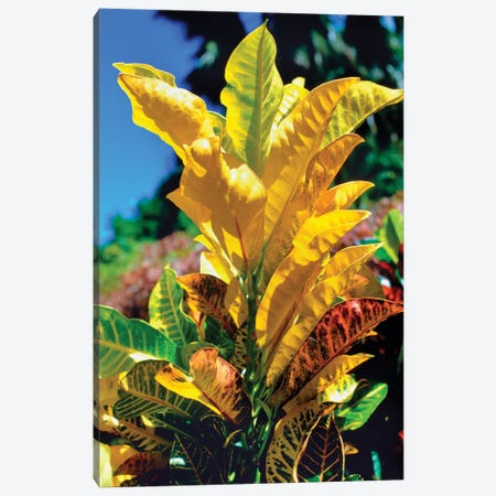 Close-Up Of Multi-Colored Leaves, Tahiti, French Polynesia Canvas Print #PIM14461} by Panoramic Images Art Print