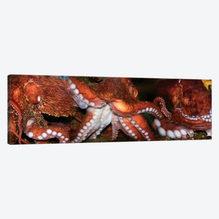 Close-Up Of Octopus Canvas Print #PIM14462} by Panoramic Images Art Print