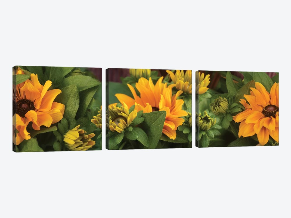 Close-Up Of Orange Flowers Blooming I by Panoramic Images 3-piece Canvas Wall Art