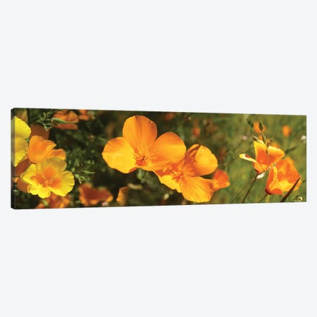 Close-Up Of Orange Flowers Blooming II Canvas Print #PIM14464} by Panoramic Images Canvas Artwork