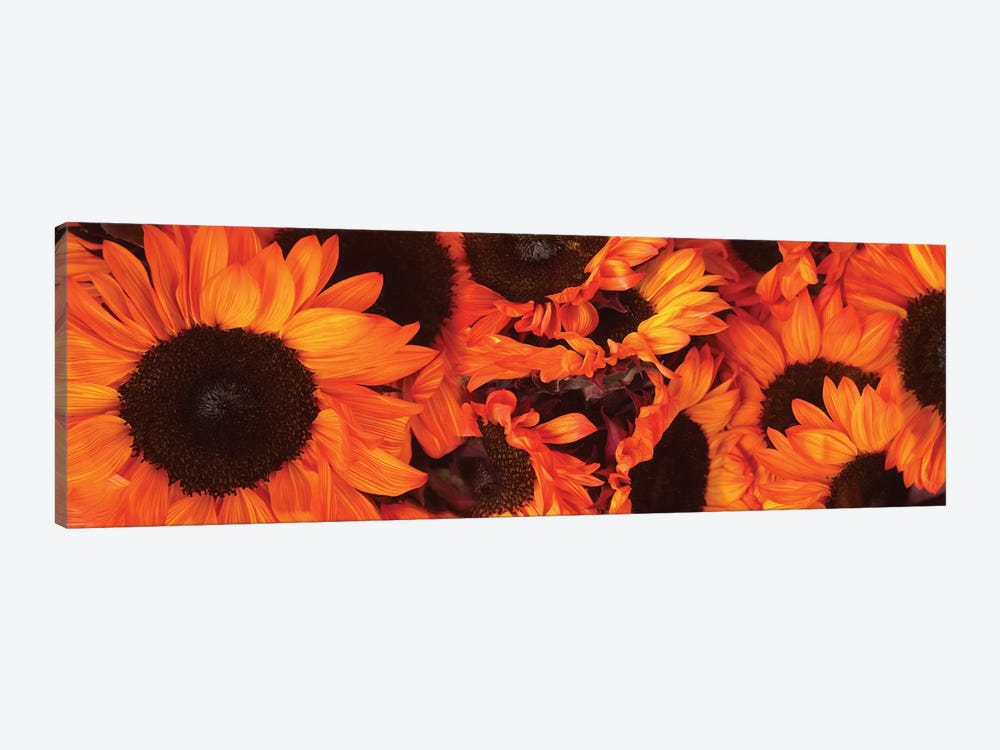 Close-Up Of Orange Sunflowers by Panoramic Images 1-piece Canvas Artwork