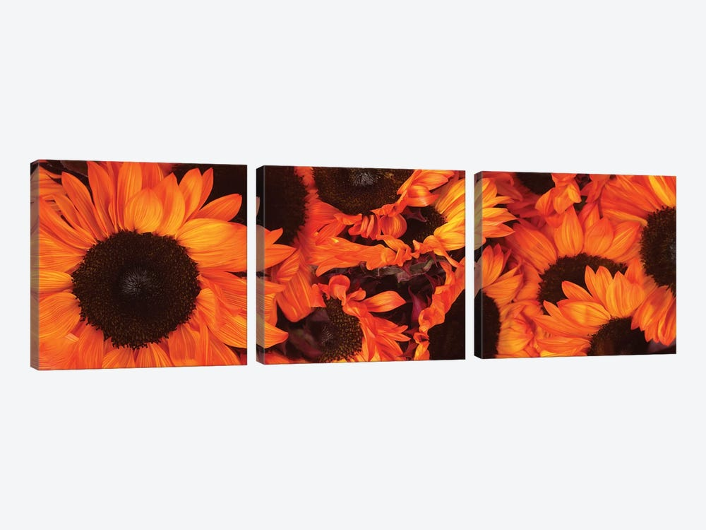 Close-Up Of Orange Sunflowers by Panoramic Images 3-piece Canvas Wall Art