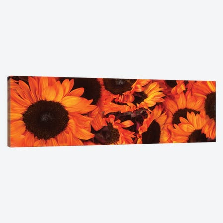 Close-Up Of Orange Sunflowers Canvas Print #PIM14465} by Panoramic Images Canvas Wall Art