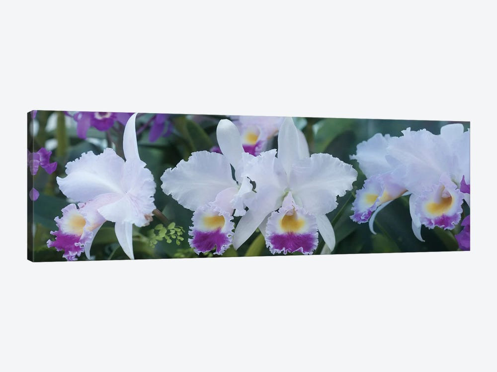 Close-Up Of Orchid Flowers I by Panoramic Images 1-piece Canvas Print