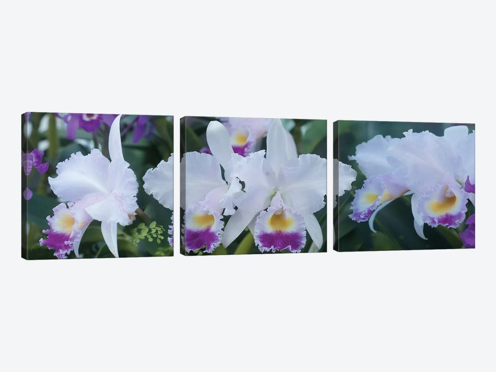 Close-Up Of Orchid Flowers I by Panoramic Images 3-piece Art Print