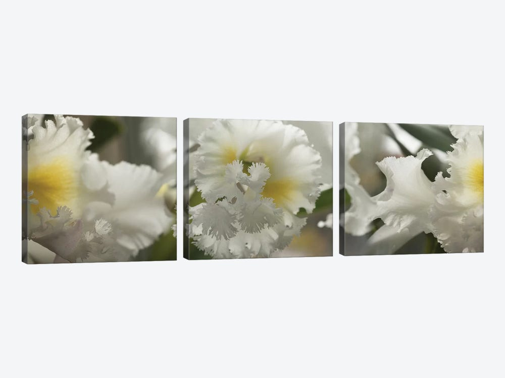 Close-Up Of Orchid Flowers II by Panoramic Images 3-piece Canvas Art