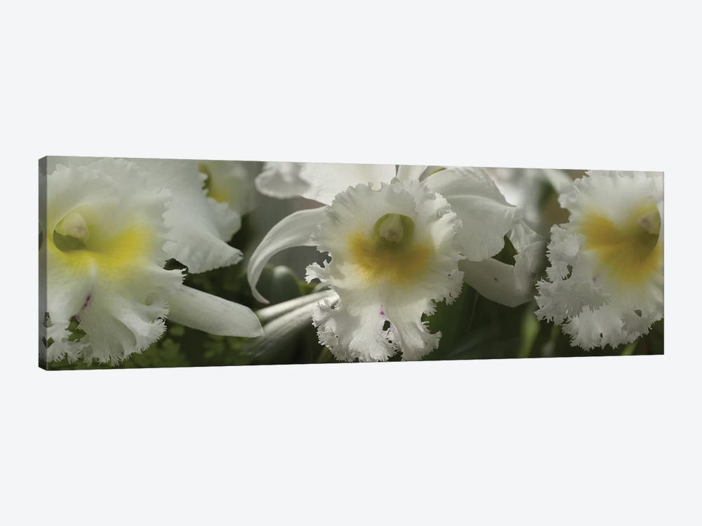 Close-Up Of Orchid Flowers III by Panoramic Images 1-piece Canvas Art Print