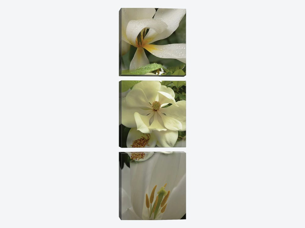 Close-Up Of Orchid Flowers IV by Panoramic Images 3-piece Canvas Art