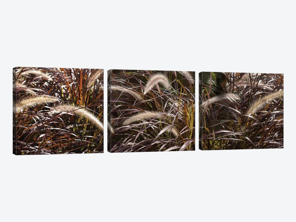 Close-Up Of Ornamental Grass by Panoramic Images 3-piece Canvas Art