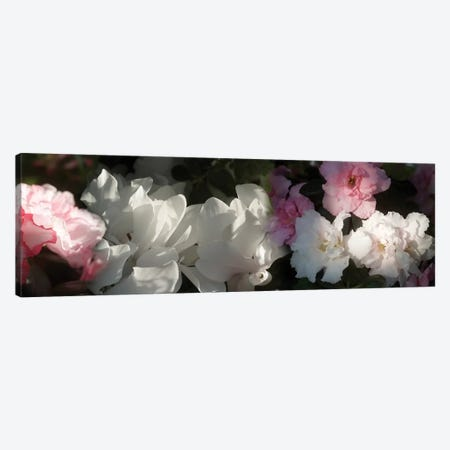Close-Up Of Pink And White Flowers Canvas Print #PIM14472} by Panoramic Images Canvas Wall Art