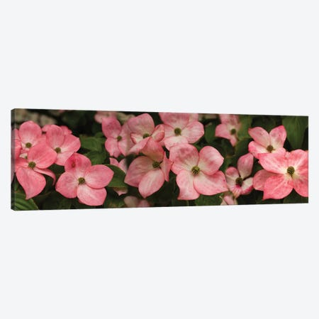 Close-Up Of Pink Flowers Blooming On Plant Canvas Print #PIM14477} by Panoramic Images Canvas Art Print