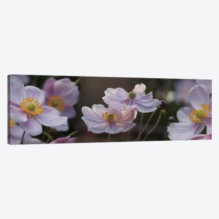 Close-Up Of Pleasing Pastels Flowers Canvas Print #PIM14483} by Panoramic Images Canvas Print