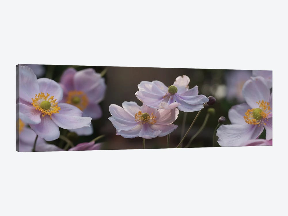 Close-Up Of Pleasing Pastels Flowers by Panoramic Images 1-piece Canvas Artwork