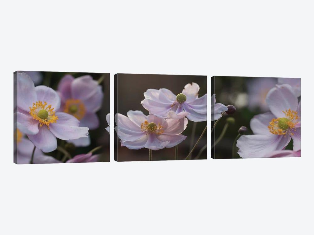 Close-Up Of Pleasing Pastels Flowers by Panoramic Images 3-piece Canvas Art