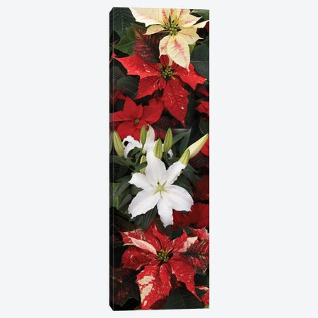 Close-Up Of Poinsettia Flowers VII Canvas Print #PIM14490} by Panoramic Images Canvas Art