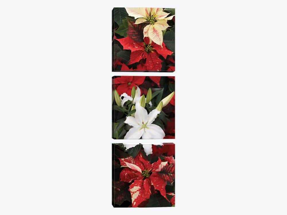 Close-Up Of Poinsettia Flowers VII by Panoramic Images 3-piece Canvas Art