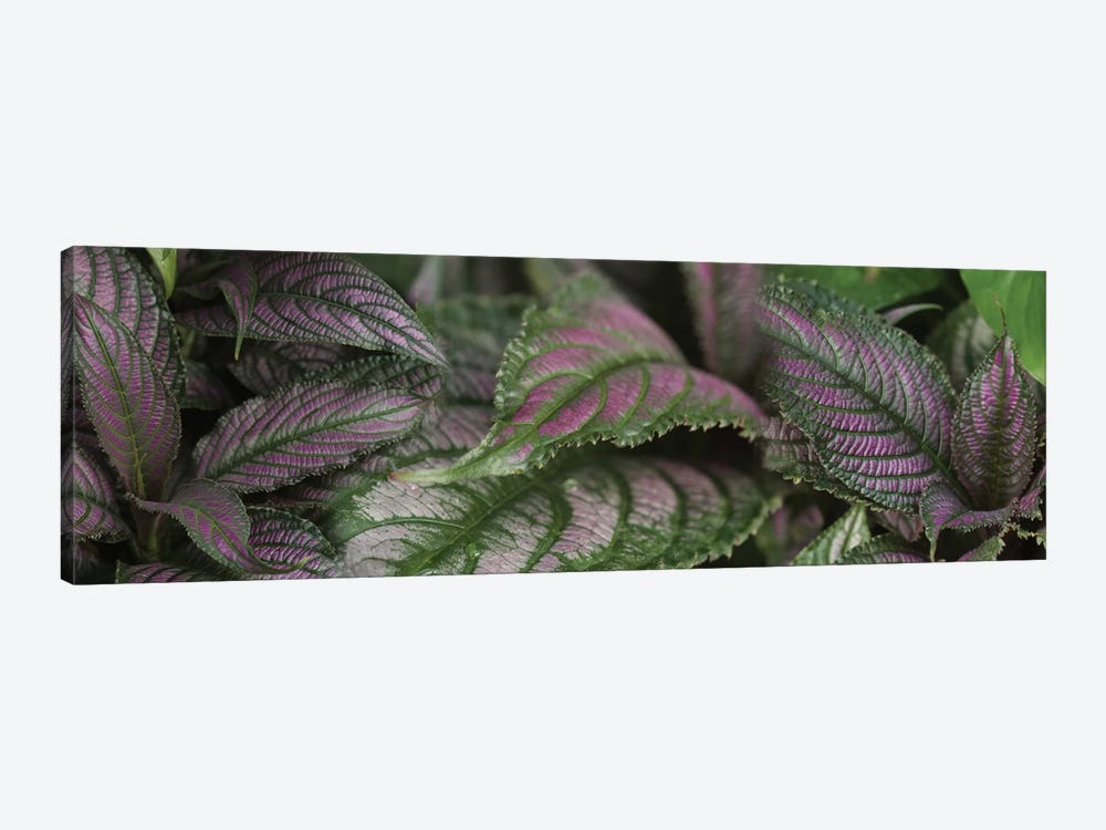 Close-Up Of Purple Leaves by Panoramic Images 1-piece Canvas Wall Art
