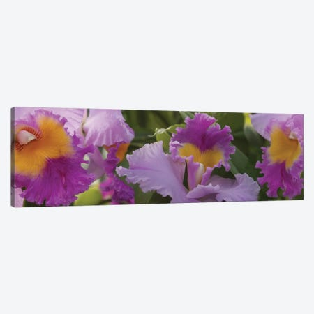 Close-Up Of Purple Orchid Flowers II Canvas Print #PIM14494} by Panoramic Images Canvas Print