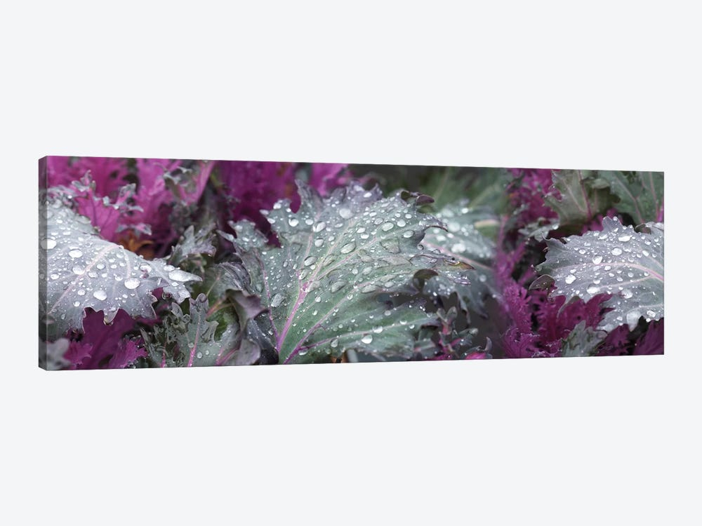 Close-Up Of Raindrops On Green And Purple Leaves by Panoramic Images 1-piece Canvas Art