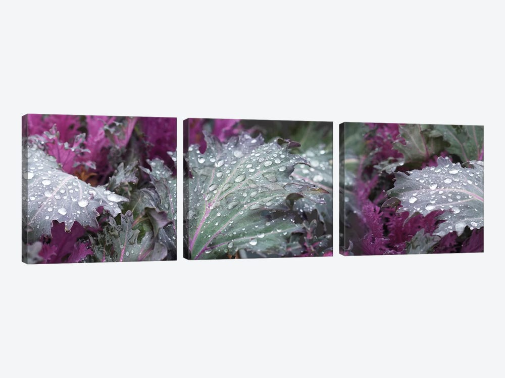 Close-Up Of Raindrops On Green And Purple Leaves 3-piece Canvas Wall Art