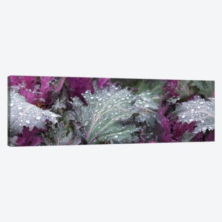 Close-Up Of Raindrops On Green And Purple Leaves Canvas Print #PIM14498} by Panoramic Images Canvas Wall Art