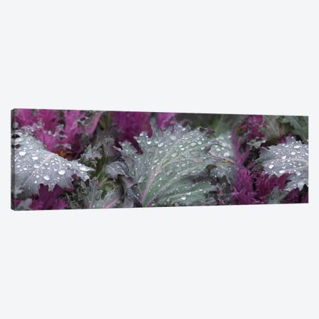 Close-Up Of Raindrops On Leaves I Canvas Print #PIM14499} by Panoramic Images Canvas Artwork