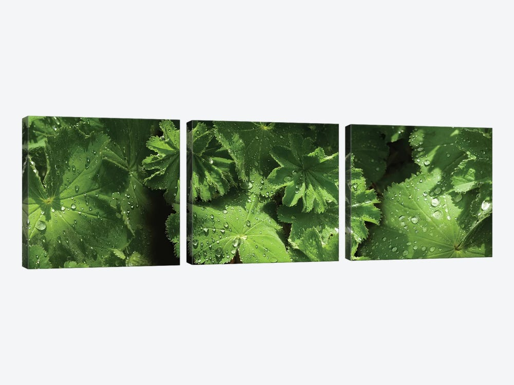 Close-Up Of Raindrops On Leaves III by Panoramic Images 3-piece Art Print