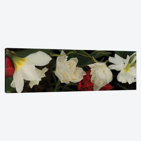 Close-Up Of Red And White Flowers In Bloom Canvas Print #PIM14506} by Panoramic Images Canvas Art Print