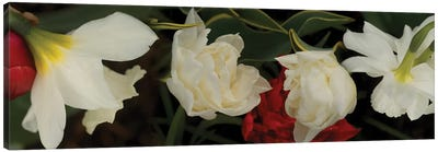 Close-Up Of Red And White Flowers In Bloom Canvas Art Print