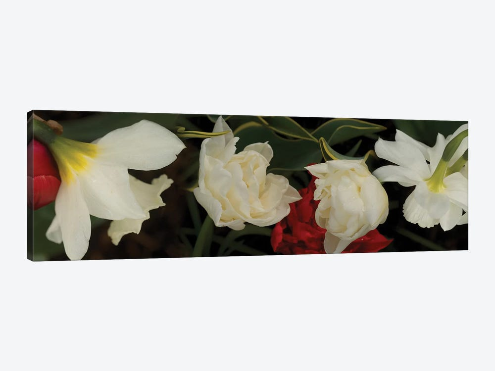 Close-Up Of Red And White Flowers In Bloom by Panoramic Images 1-piece Canvas Art
