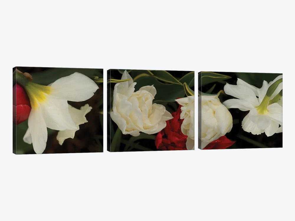 Close-Up Of Red And White Flowers In Bloom by Panoramic Images 3-piece Canvas Art