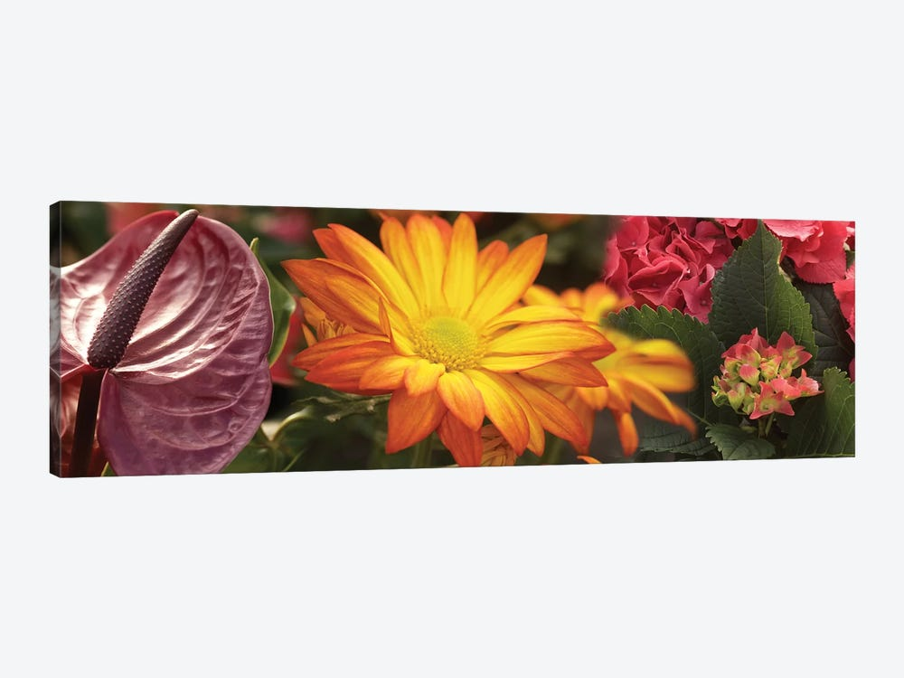 Close-Up Of Red Anthurium, Gerbera Daisy And Red Hydrangeas Flowers by Panoramic Images 1-piece Canvas Art Print