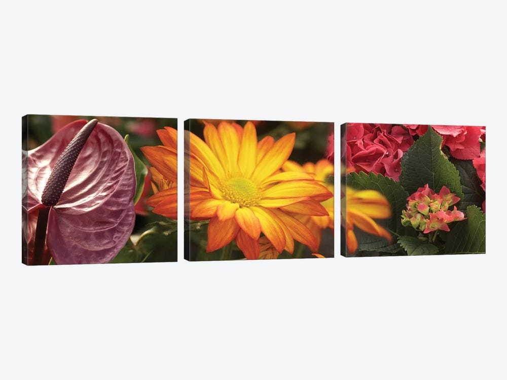 Close-Up Of Red Anthurium, Gerbera Daisy And Red Hydrangeas Flowers by Panoramic Images 3-piece Canvas Print