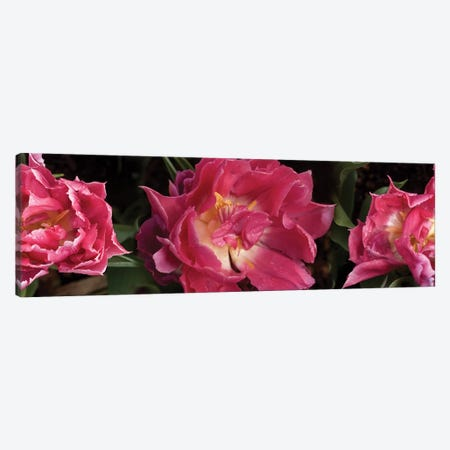 Close-Up Of Red Flowers Blooming Canvas Print #PIM14511} by Panoramic Images Canvas Print