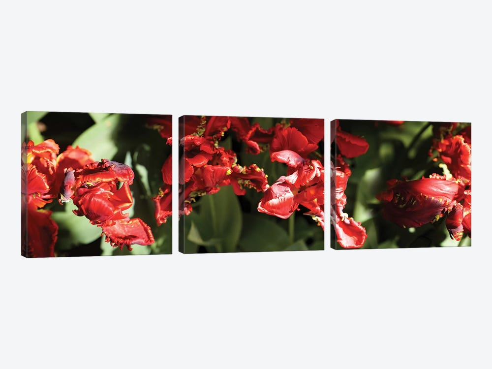 Close-Up Of Red Flowers Blooming On Plant by Panoramic Images 3-piece Art Print