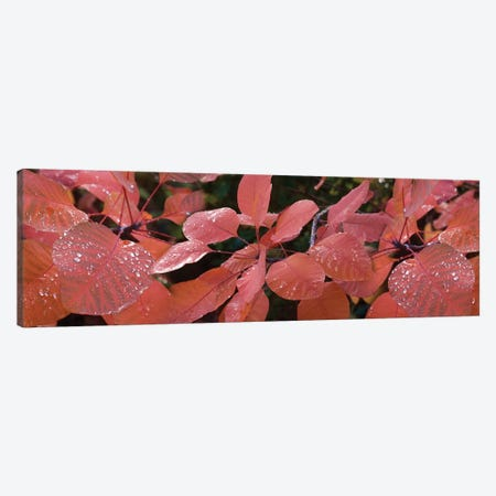 Close-Up Of Red Leaves In The Rain I Canvas Print #PIM14514} by Panoramic Images Canvas Artwork