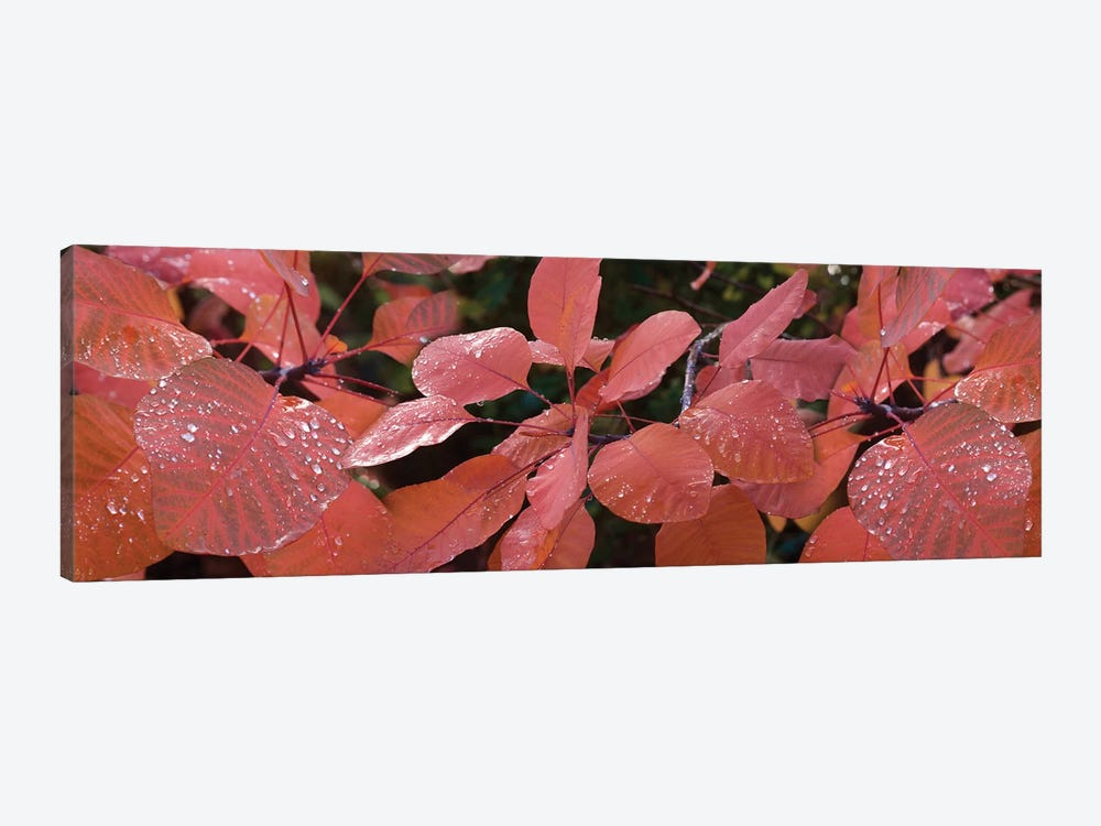 Close-Up Of Red Leaves In The Rain I by Panoramic Images 1-piece Art Print