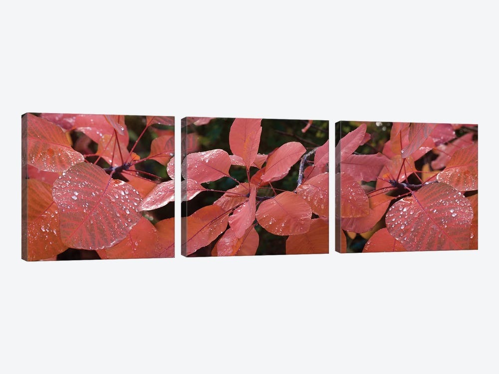 Close-Up Of Red Leaves In The Rain I by Panoramic Images 3-piece Canvas Art Print
