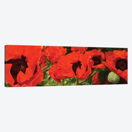 Close-Up Of Red Poppy Flowers Canvas Print #PIM14516} by Panoramic Images Canvas Artwork